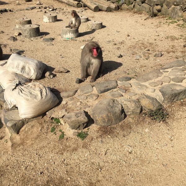 小豆島 原付ツーリング  お猿の国