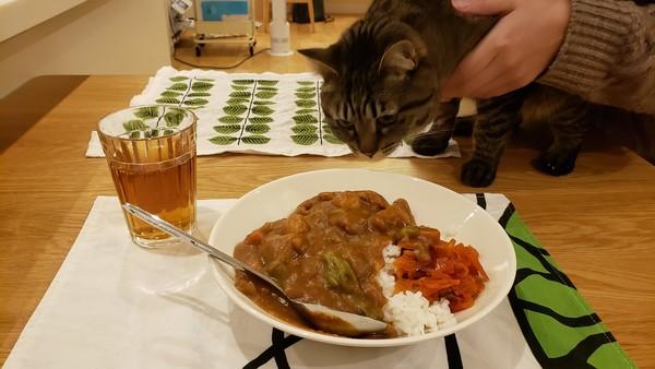 昨日の晩御飯はカレーと猫