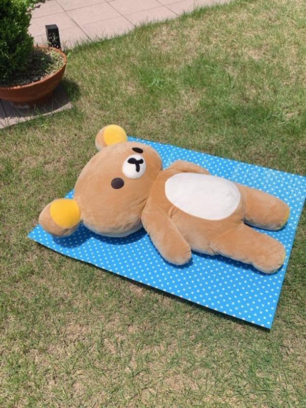 リラックマの日光浴!