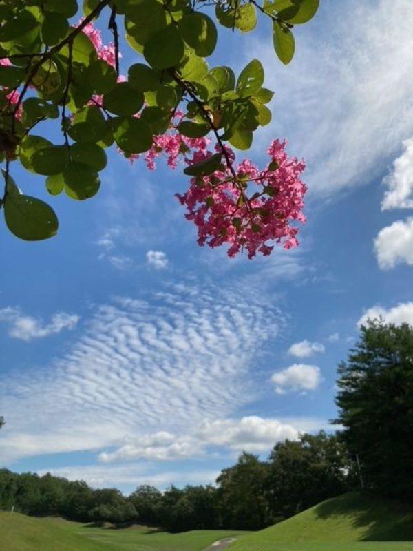 残暑厳しいけれど、雲はもう秋❓😄✨