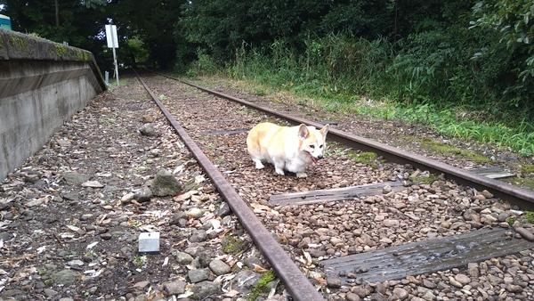 旧国鉄廃線